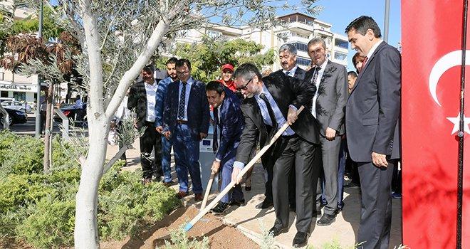Ekolojik binanın bahçesine zeytin ağacı dikildi