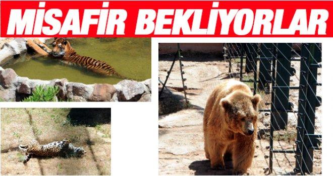 Gaziantep Hayvanat Bahçesi bayrama hazır