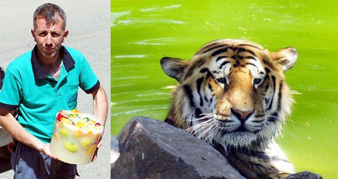 Gaziantep Hayvanat Bahçesi'ne, 'sıcak' ayarı