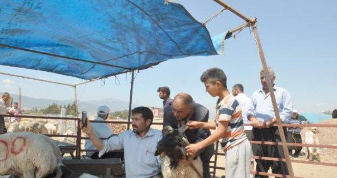 Gaziantep'te  Dört boynuzlu koç bin 400 liraya satıldı