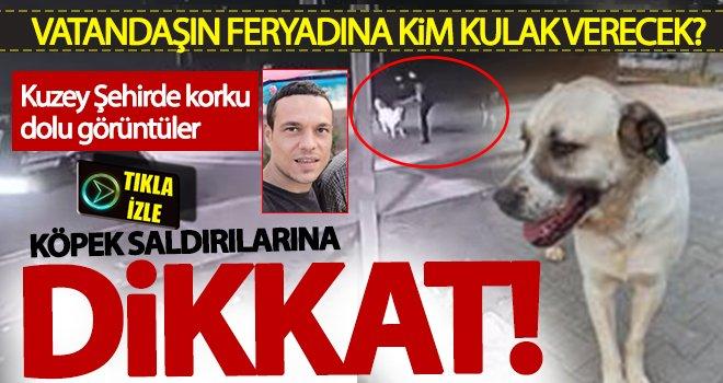 Gaziantep'te başıboş sokak köpekleri tehlike saçıyor