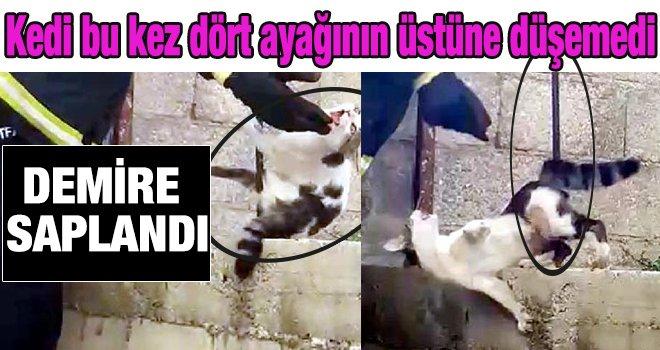 Gaziantep'te çatıdan atlayan kedi, demire saplandı