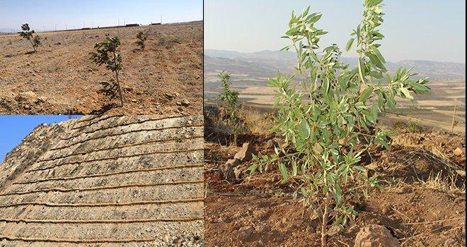 Gaziantep'te Erezyonla mücadelede yeni yöntem