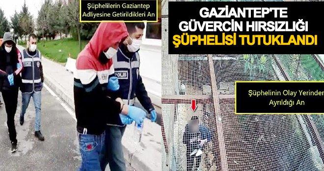 Gaziantep'te güvercin hırsızlığı: 3 tutuklama