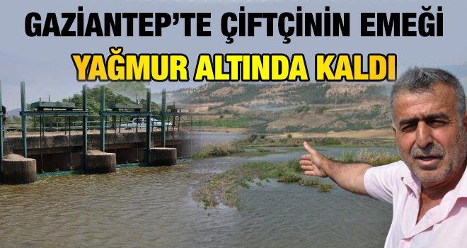 Gaziantep'te Karasu Çayı taştı; ekili alanlar su altında kaldı