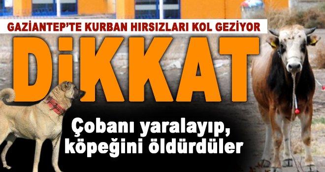 Gaziantep'te kurban hırsızları cirit atıyor!