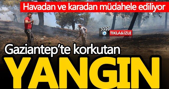 Gaziantep'te orman yangınında köylülerden seferberlik