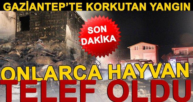 Gaziantep'te yangın! Bir anda alev aldı cayır cayır yandı...
