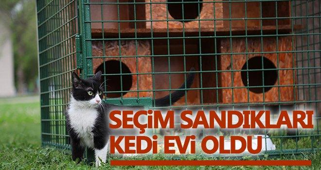 Hayri Tütüncüler Parkı'na yeni kedi evleri kuruldu