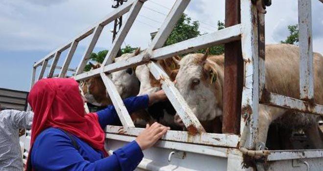 İslahiye'de genç çiftçilere hayvan desteği