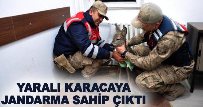 Jandarma, yaralı yavru karacaya sahip çıktı