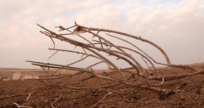 Kuraklık gölleri kuruttu, mevsimler şaşırdı