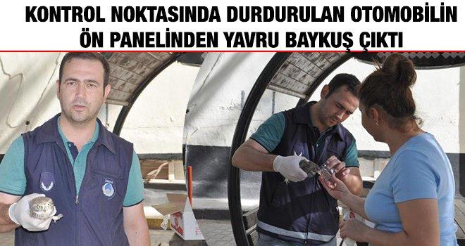 Kurtarılan yaralı baykuş, tedaviye alındı