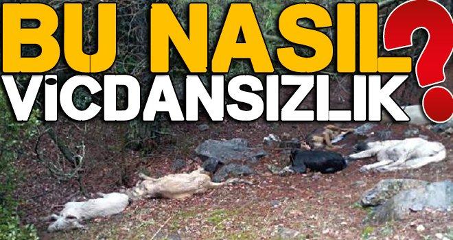 Ormanlık alanda telef edilmiş 6 köpek bulundu