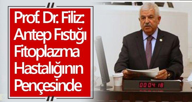 Prof. Dr. Filiz: Antep fıstığı ağaçlarımız hastalanıyor
