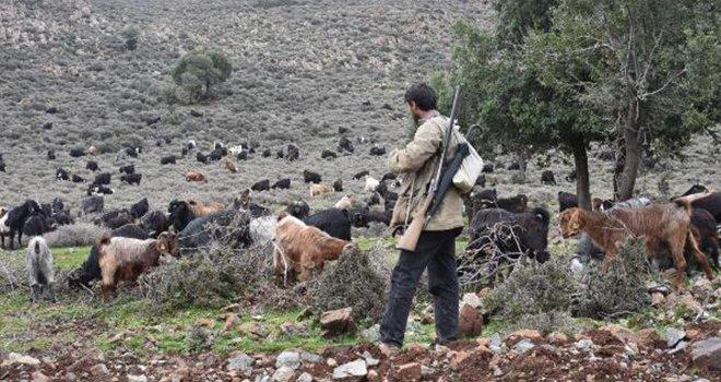 Suriye sınırında çobanların yaşam mücadelesi