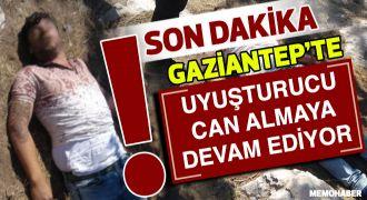 Gaziantep'te bonzai can almaya devam ediyor